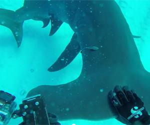 GoPro サメ